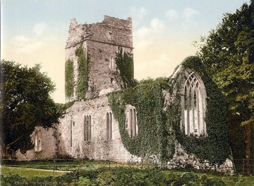 [Muckross Abbey. Killarney. Co. Kerry, Ireland]